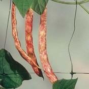 Поддържащи мрежи за увивни растения