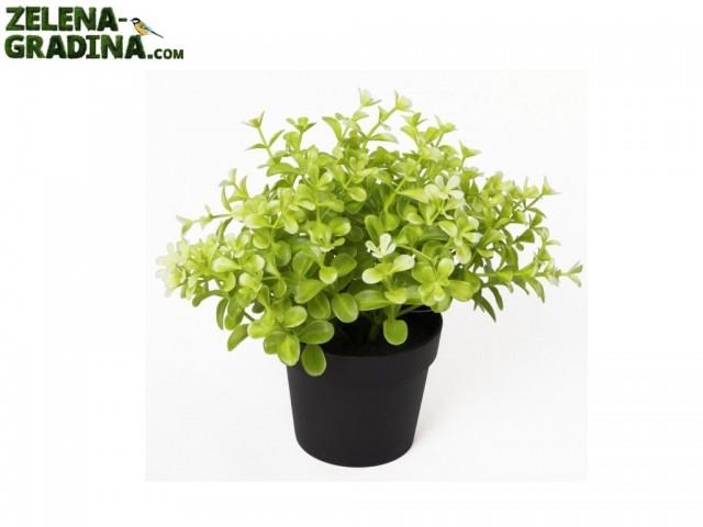 """B543Z-36930-PR03 - Изкуствено растение """"Чемшир"""" в саксия, Размер на растението: 20.30 cm, Размер на саксията: 10 cm"""