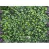 """MZ 188024C Декоративни плочки модел """"Гардения"""", 4 бр. с размери 50x50 cm, Цвят: Зелен"""